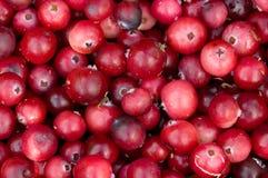 клюква ягод предпосылки Стоковое Изображение