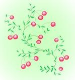 клюква bushes ягод Стоковые Фото