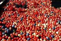 Клюквы, голубики, поленики и ежевики ягод на подносе Стоковое фото RF