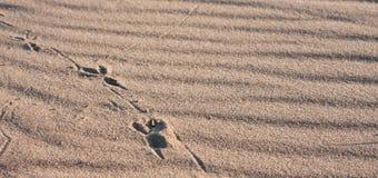 Ключи на песке 1 Стоковое фото RF