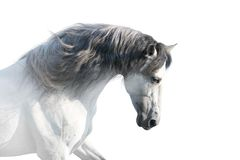 Ключ высоты белой лошади стоковое фото
