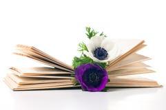 книга ветреницы цветет старые 2 Стоковые Фотографии RF