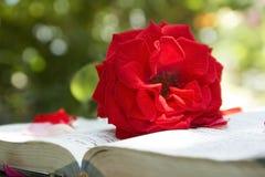 Книга влюбленности Стоковое фото RF