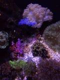Книга Гиннесса мира моря мировых рекордов стоковое фото