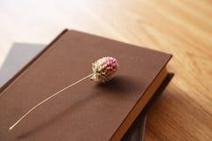 Книга и высушенный цветок Стоковая Фотография