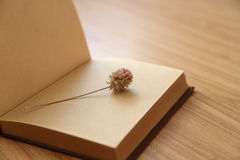 Книга и высушенный цветок Стоковые Изображения RF