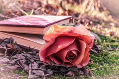Книга и подняла Стоковые Изображения RF