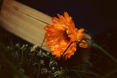 Книга и цветок Стоковые Изображения RF