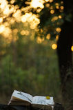 Книга поэзии под деревом Стоковое Изображение RF