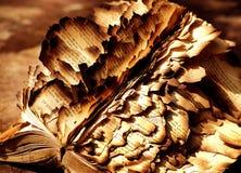 книга сгорела Стоковая Фотография