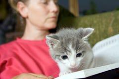 Книга чтения котенка стоковое изображение rf