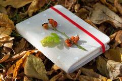 Книги среди листьев осени под мягким солнечным светом Стоковая Фотография
