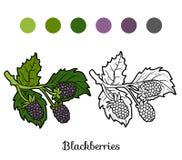 Книжка-раскраска: фрукты и овощи (ежевики) бесплатная иллюстрация