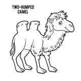Книжка-раскраска, Two-humped верблюд Стоковое Изображение RF