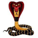 кобра стоковые изображения