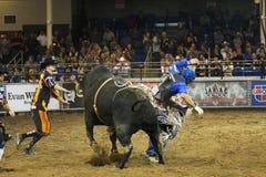 Ковбои всадника быка родео Стоковое Фото