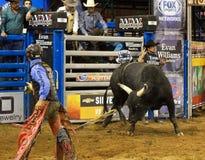 Ковбои всадника быка родео Стоковая Фотография RF
