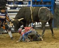 Ковбои всадника быка родео Стоковое Изображение