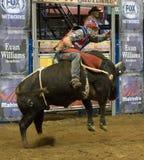 Ковбои всадника быка родео Стоковое фото RF