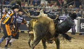Ковбои всадника быка родео Стоковые Фотографии RF