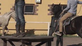 Ковбои в шляпах и лассо Ковбои на лошадях сток-видео