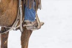 Ковбои табуня лошадей в снеге стоковая фотография rf