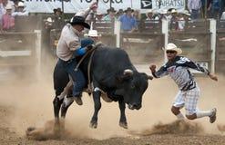 ковбой быка падая родео Стоковая Фотография