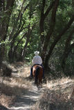 Ковбой ехать его лошадь в лесе. стоковое фото rf