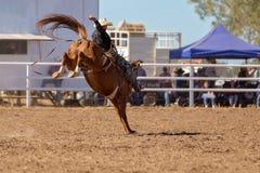 Ковбой ехать лошадь Bronc a Bucking на родео страны Стоковые Изображения RF