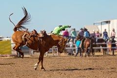 Ковбой ехать лошадь Bronc a Bucking на родео страны Стоковое Изображение RF