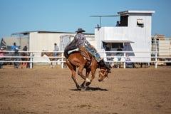 Ковбой ехать лошадь Bronc a Bucking на родео страны Стоковые Фотографии RF
