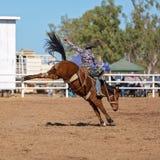Ковбой ехать лошадь Bronc a Bucking на родео страны Стоковое Изображение