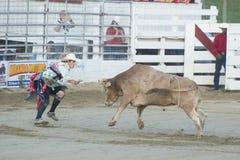 Ковбой Cowtown Стоковая Фотография RF