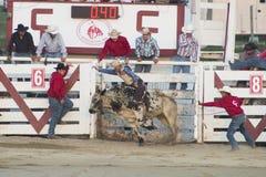 Ковбой Cowtown Стоковое Изображение RF