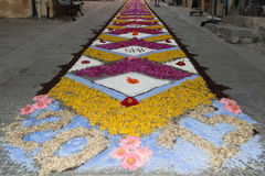 Ковер лепестка и цветка для торжества christi domini сборника Стоковое Фото