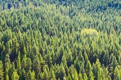 Ковер деревьев Стоковые Изображения RF