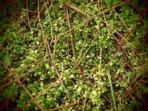 Ковер леса Стоковая Фотография RF
