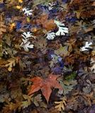 Ковер листьев осени сухих в воде. Стоковое Изображение