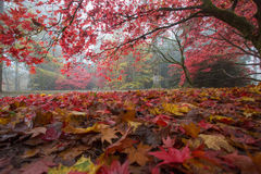 Ковер листьев осени Стоковая Фотография