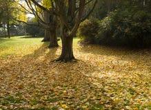 Ковер листьев падения в древесинах Стоковое Изображение RF