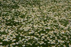 Ковер стоцвета Стоковые Изображения