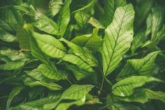 Ковер тропических заводов, предпосылка весны лета, стильно подкрашиванная картина джунглей стоковые фотографии rf
