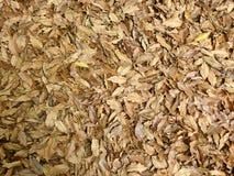 Ковер упаденных сухих листьев в осени Стоковые Фотографии RF
