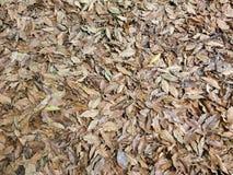 Ковер упаденных сухих листьев в осени Стоковая Фотография