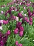 Ковер цветка на выставке сада Стоковая Фотография RF