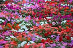 Ковер цветков Стоковое Изображение RF