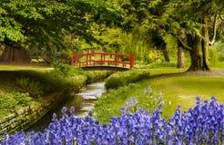 Ковер bluebells около моста в садах Борнмута стоковые фото