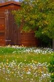 Ковры счастливых белых маргариток и лютиков и gazanieas солнечности желтых стоковое фото