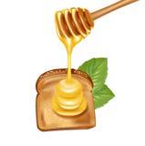 Ковш при мед сосредоточенно изучая на куске хлеба Иллюстрация штока