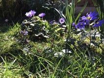 Когда солнце светит, цветки усмехаются стоковые фотографии rf